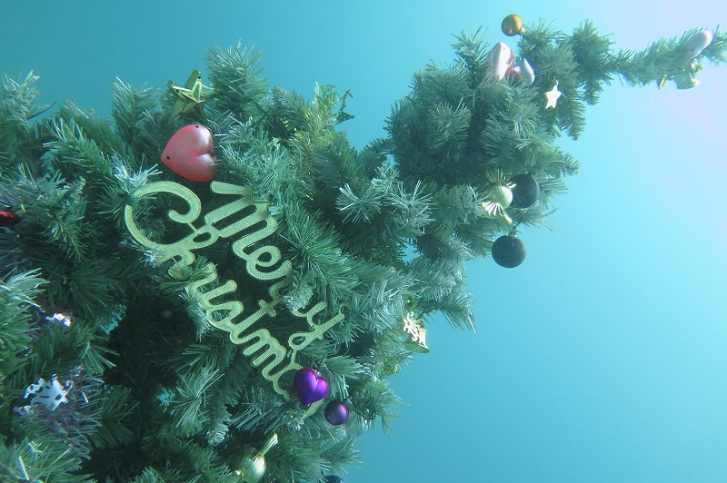 川奈・クリスマスツリー